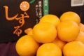雫流しずるみかん 5kg S〜L【愛媛県産】糖度12・5度以上!
