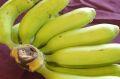 島バナナ1房 約8~12本 約1kg 沖縄産