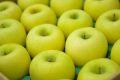 シナノゴールドりんご取寄販売 爽やかな酸味が特徴のシナノりんごを通販で。約5kg 約14玉~約18玉 山形・長野・他産地
