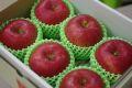 シナノスイートりんご通販 長野生まれのシナノりんごを販売取寄。小箱 約5玉〜約6玉 山形・長野産
