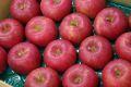 シナノスイートりんご取寄販売 長野生まれのシナノりんごを通販で。約5kg 約14玉〜約18玉 山形・長野産