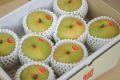 新甘泉(しんかんせん)通信販売 鳥取のブランド和梨を販売取寄。 中箱 約7玉~約9玉 鳥取産