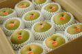 新甘泉(しんかんせん)取寄販売 鳥取のブランド和梨を通販で。約5kg 約10玉~約16玉 鳥取産
