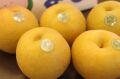 新王梨(しんおうなし) 新潟県産 通販 小箱 約4玉~約6玉