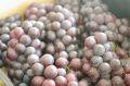 スチューベン葡萄通販 山形ぶどうを販売取寄。約2kg 約5房~9房 山形産