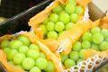シャインマスカット葡萄取寄販売 種なし皮ごと食べられるぶどうを通販で。3房 約1650g