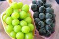シャインマスカット葡萄1房&ナガノパープル葡萄1房セット販売 種なし2種類詰合せ果物ギフトに。