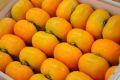 庄内柿お取り寄せ 種が無くなめらかな食感の柿を販売通販。2L~3Lサイズ 約10k 約40玉~約48玉 山形産