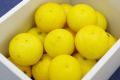 ご家庭用・傷サイズ不揃い・ワンンランク下の等級優品です。湘南ゴールド通販 神奈川県オリジナルゴールデンオレンジを販売取寄。約2kg 約20玉~