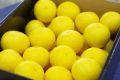 ご家庭用・傷サイズ不揃い・ワンンランク下の等級優品です。湘南ゴールド通信販売 神奈川県オリジナルゴールデンオレンジを販売取寄。約3kg 約32玉~