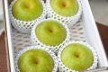秋麗梨(しゅうれいなし)通販 熊本の糖度約13度の和梨を販売取寄。小箱 約5玉~約6玉 熊本産