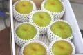 秋麗梨(しゅうれいなし)通信販売 熊本の糖度約13度の和梨を販売取寄。中箱 約7玉~約9玉 熊本産