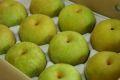 秋麗梨(しゅうれいなし)取寄販売 熊本の糖度約13度の和梨を通販で。約5kg 約10玉~約16玉 熊本産