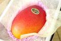 太陽の卵マンゴー通販 宮崎産アップルマンゴー販売。糖度15度以上 大玉1玉