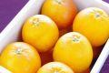 タロッコオレンジ(ブラッドオレンジ)通販 タロッコ種は甘みが強い品種で販売取寄。約2kg 愛媛・他産地