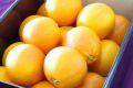 タロッコオレンジ(ブラッドオレンジ)通信販売 タロッコ種は甘みが強い品種で販売取寄。約3kg 愛媛・他産地