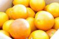 タロッコオレンジ(ブラッドオレンジ)取寄販売 タロッコ種は甘みが強い品種を通販で。約5kg 愛媛・他産地
