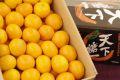 天下糖一みかん てんかとういつ蜜柑JAとぴあ浜松  静岡県 糖度12度以上 5kg