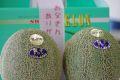 父の日銚子アムスメロンギフト通販 等級甘さ16をお父さんにプレゼント。2玉入 千葉県産