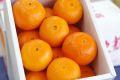 津之輝(つのかがやき)通販 温室栽培の糖度約13度の柑橘を販売取寄。小箱 約2kg S〜2L 長崎県産