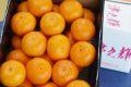 津之輝(つのかがやき)通信販売 温室栽培の糖度約13度の柑橘を販売取寄。中箱 約3kg S〜2L 長崎県産