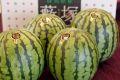 藪塚西瓜通信販売 群馬産。シャリ感が違う小玉スイカを販売。果物ギフト 約8kg 4玉〜5玉