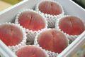 山形桃通販 糖度12度以上ももを販売取寄。残暑見舞いに 小箱 約6玉