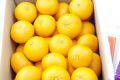 ゆめほっぺ山口産販売 糖度13.5度以上のせとみを通販で取寄。約5kg 山口県産