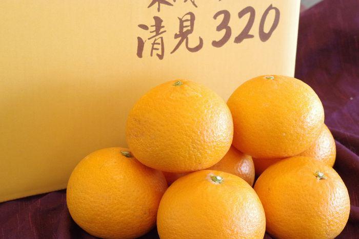 木成り完熟清見オレンジ販売 下津クラウン果樹協同組合の清見320を通販で取り寄せ。約3k L〜3L