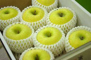 シナノゴールドりんご通信販売 爽やかな酸味が特徴のシナノりんごを販売取寄。中箱 約7玉~約9玉 山形・長野・他産地