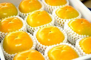 太秋柿(たいしゅうがき)通販 うずまき状の条紋が特徴の甘柿を販売取寄。約3kg 約9玉~約12玉 熊本産・他産地