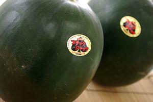 種なし西瓜通販 ブラックジャックスイカの販売。皮が黒色で果肉は赤色。お中元に 千葉・他産地 1玉