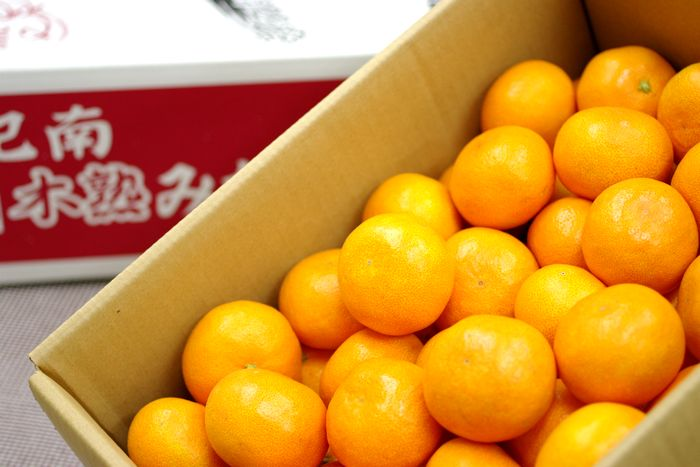 紀南の木熟みかん通販 天(てん) お歳暮和歌山みかん販売。糖度12度以上 5kg S~L