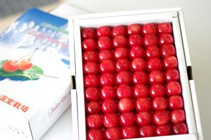 父の日さくらんぼギフト取寄販売 山形佐藤錦をお父さんにプレゼント。化粧箱約500g L~2L