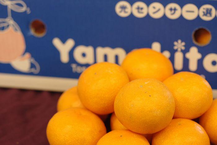 山北みかん販売 お歳暮高知県みかん通販 JA土佐香美やまきた蜜柑 糖度11.5度以上のお取り寄せ5kg