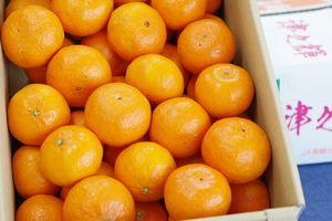 津之輝(つのかがやき)取寄販売 温室栽培の糖度約13度の柑橘を通販で。約5kg S〜2L 長崎県産
