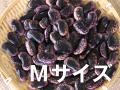 紫花豆 Mサイズ