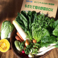 有機栽培 旬の野菜セット