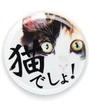 缶バッチ 猫 猫でしょ! ネコ ねこ 猫柄 雑貨 SCOPY スコーピー