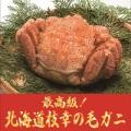 北海道枝幸産毛ガニ(660g)【送料無料】