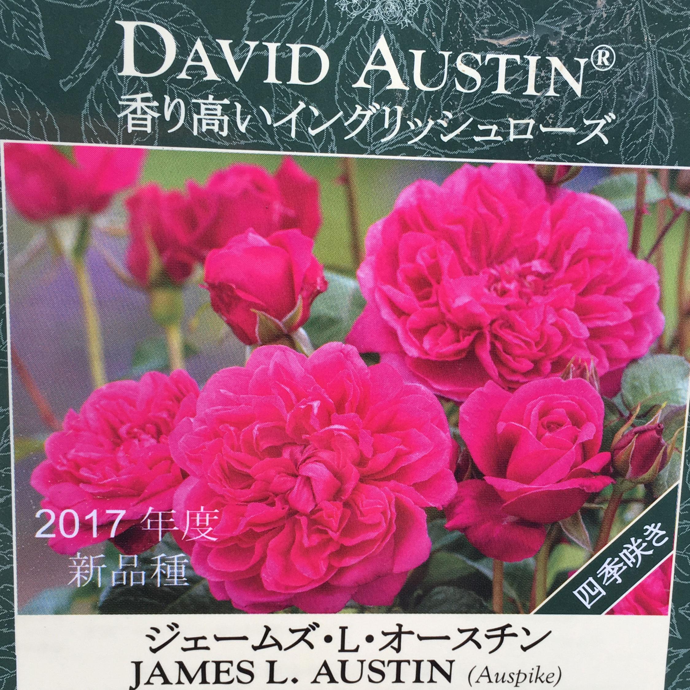 薔薇(バラ)苗木の販売店【花育通販】ジェームズ・L. オースチン