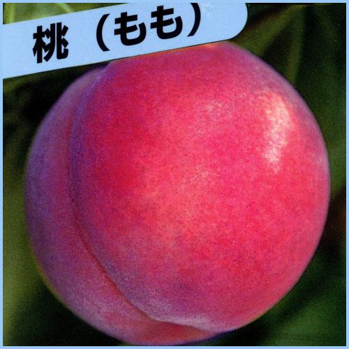 桃(もも)苗木を販売