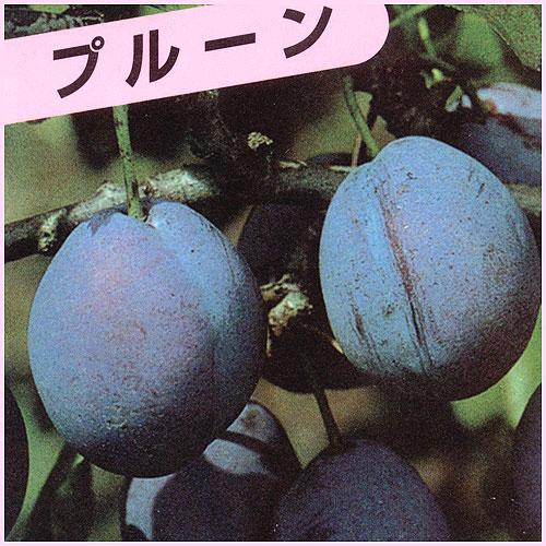 プルーン苗木を販売