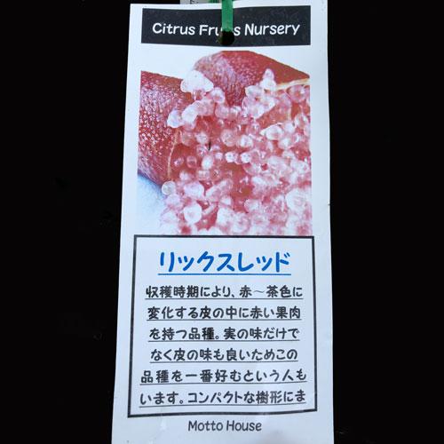 フィンガーライム「リックスレッド」の苗木を販売【花育通販】