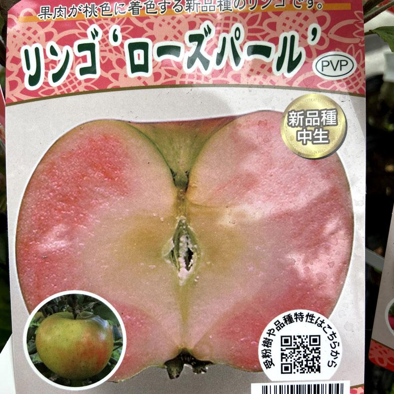 リンゴ ローズパール