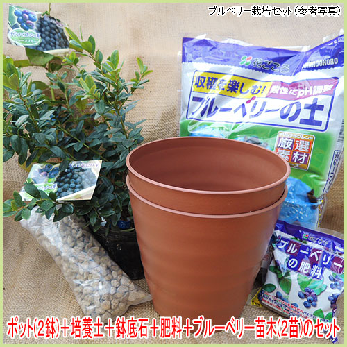 家庭菜園・ベランダ菜園用のブルーベリー栽培セットを販売