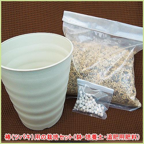 椿(ツバキ・つばき)苗木の栽培セットを販売