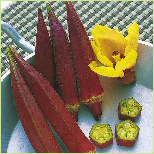 オクラ・エンドウ・豆類(枝豆・落花生)など家庭菜園の苗の販売店