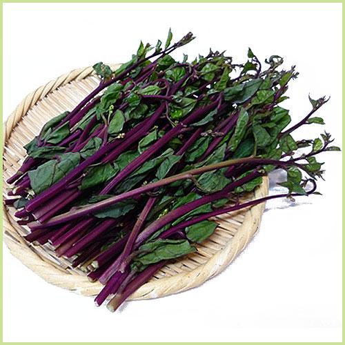 ツルムラサキ(つるむらさき)の苗など家庭菜園野菜の販売店