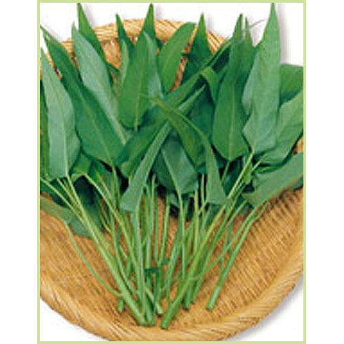 空芯菜(ヨウサイ・エンツァイ)の苗など家庭菜園野菜の販売店